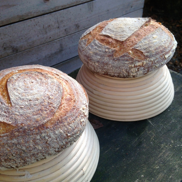 Semolina and sesame loaves perched on bannetons