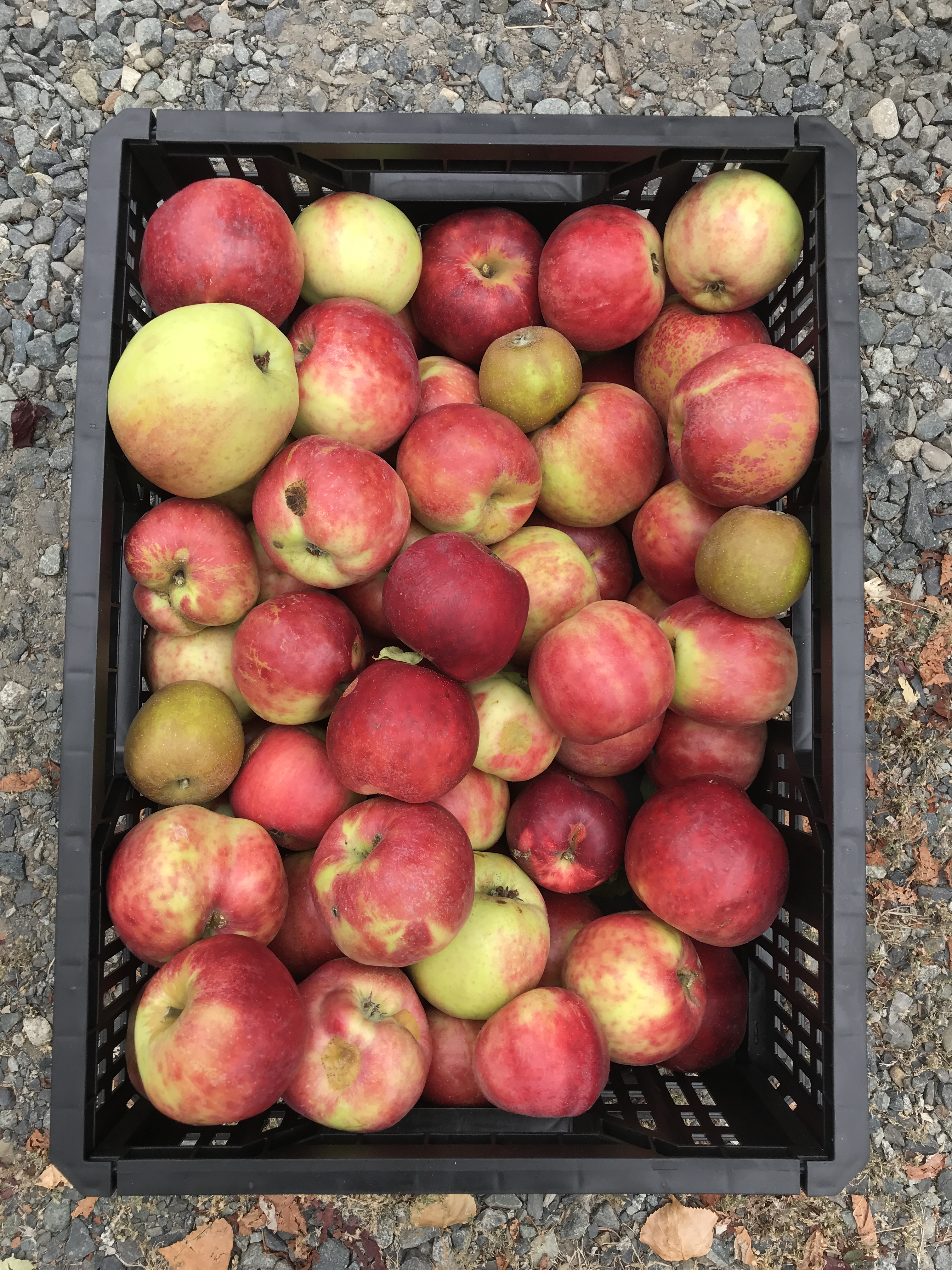 Harvest box 2&3